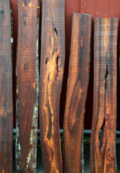 самая тяжелая древесина