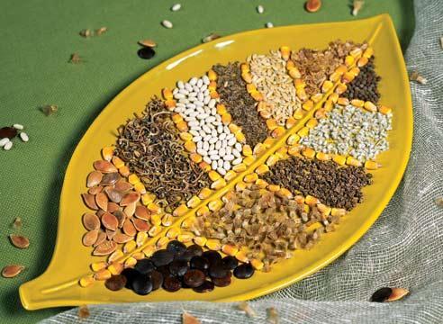 Срок годности семян