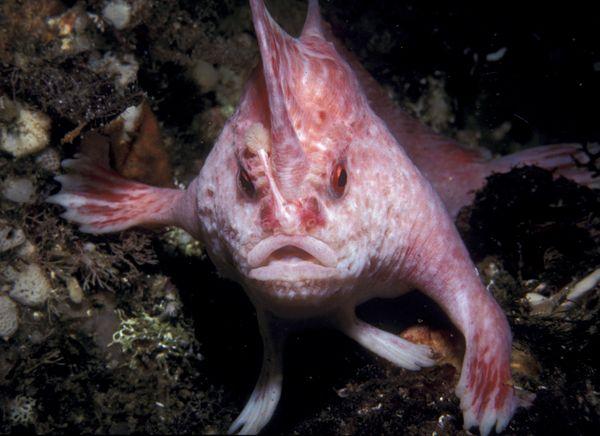 Рыба с ногами