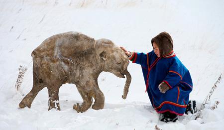 кровь мамонтов - естественный антифриз