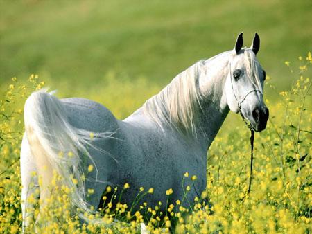 Одомашнивание лошадей