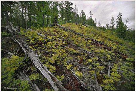 Место падения Тунгусского метеорита в наши дни