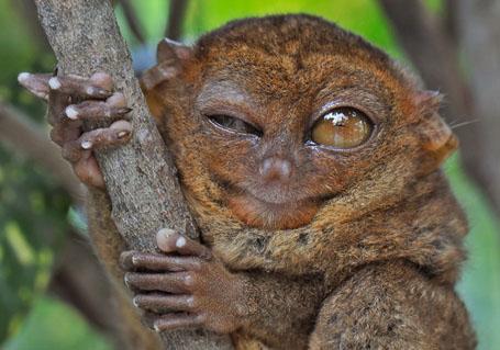 Самые необычные глаза в животном мире