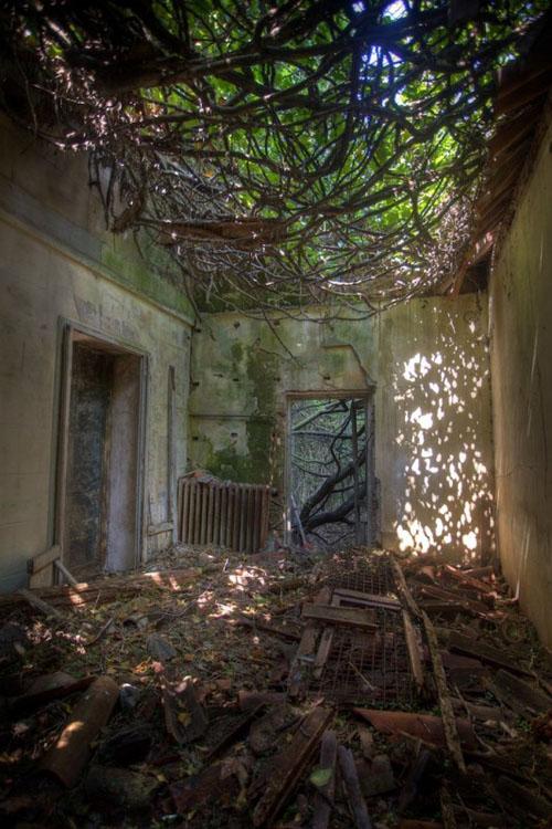 Остров Повеглия - лоза вместо потолка